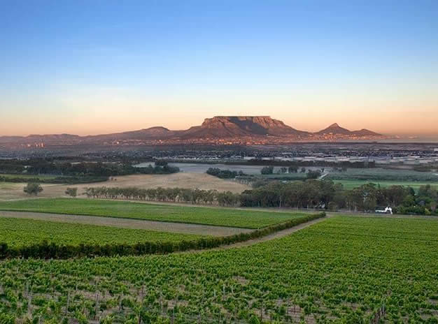 Durbanville Region Private Tour